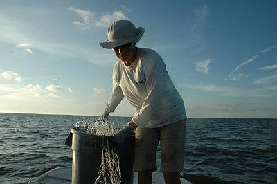 prepparing shark nets