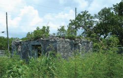 old overgrown building