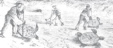 illustration of turtle flipping
