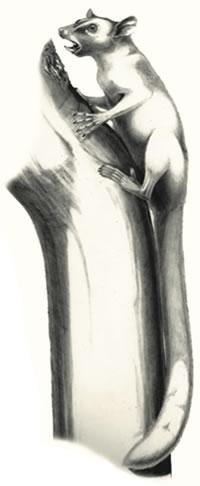 drawing of Ignacius