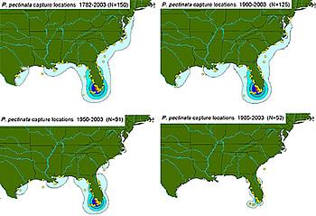 sawfish distribution maps