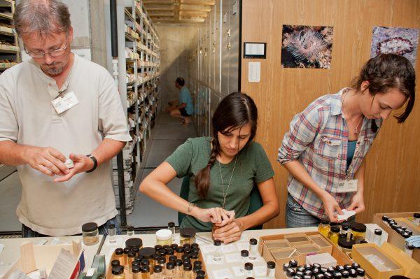 John Slapinsky, Valeria Segui and Ashley Berkow label specimens