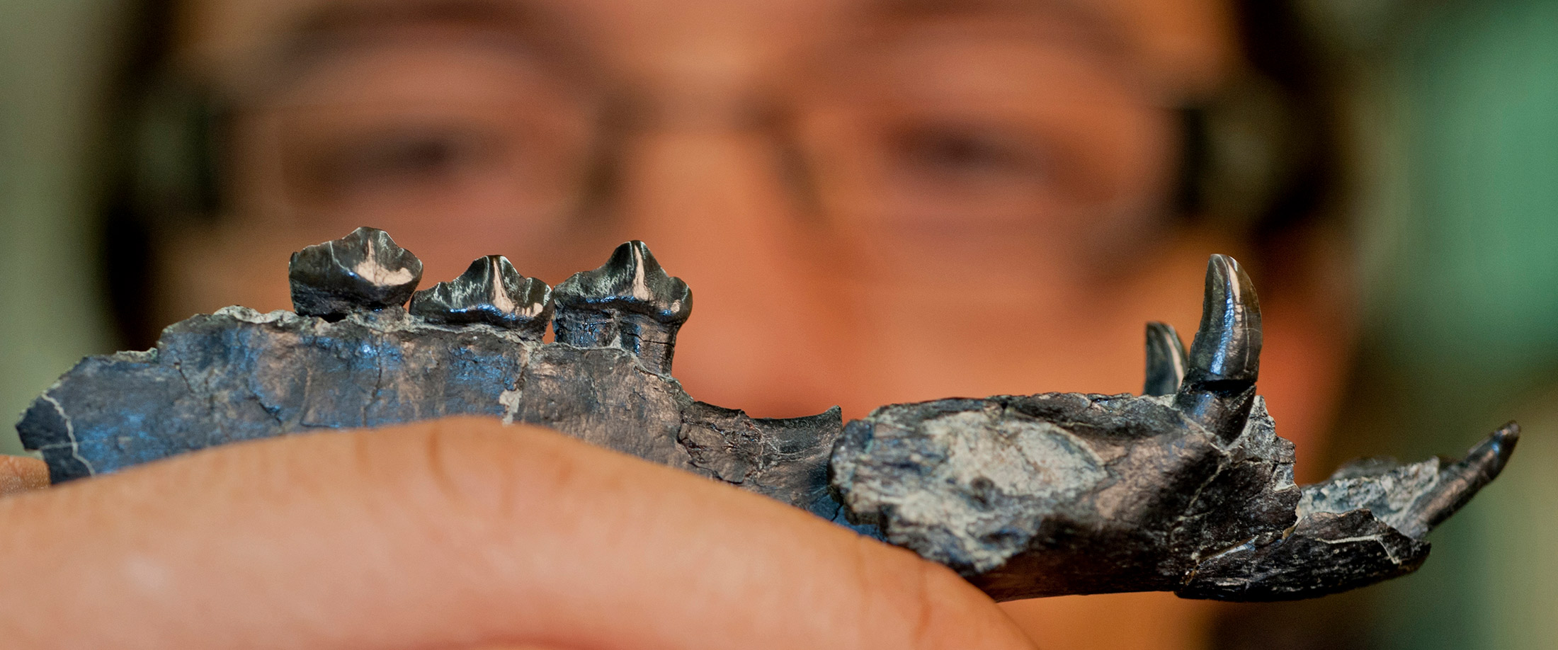Aldo Rincon displays the jaw of the 20-million-year-old camel