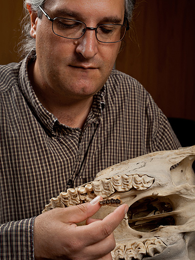Jonathan Bloch compares the upper jaw of Sifrhippus