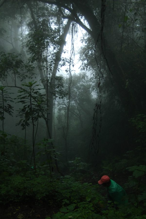 Guatemalan cloud forest