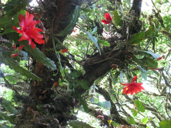 red flowers growing on a tree