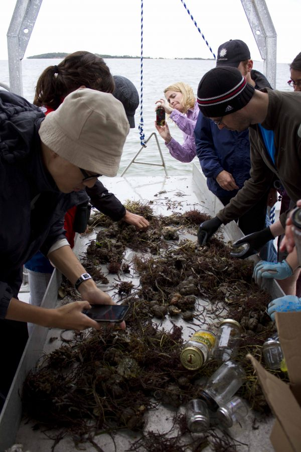 Researchers sort contents collected near Cedar Key