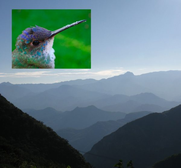 hummingbird and mountains
