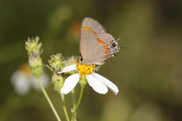 small brown butterfly on white flower