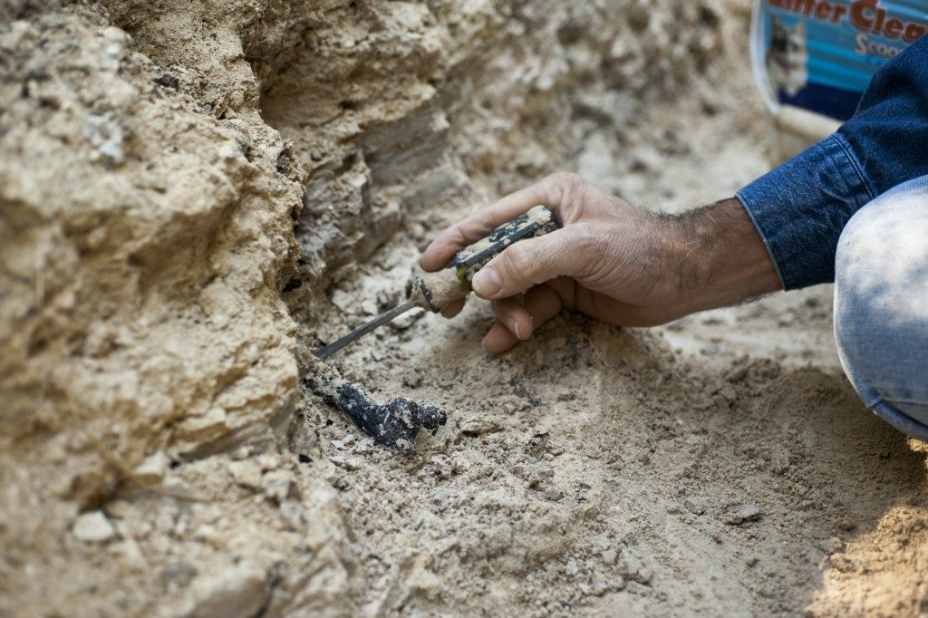 Tarnuzzer scraping clay from a fossil