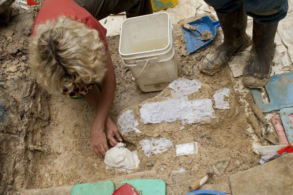 Lockner forms a plaster jacket around a fossil