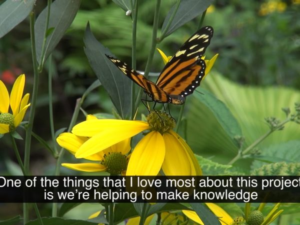 An orange butterfly rests on a yellow flower