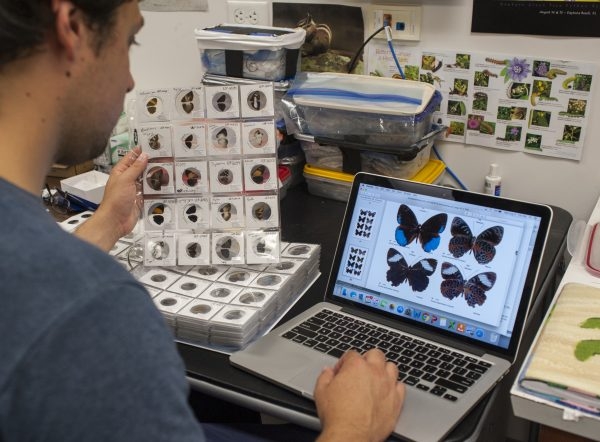 Ryan comparing specimens