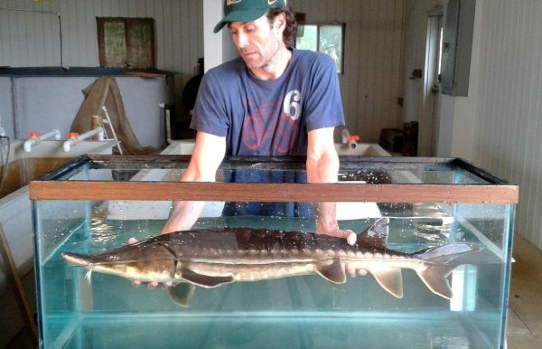 Rob holding live sturgeon