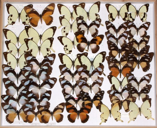 box of multicolored butterflies