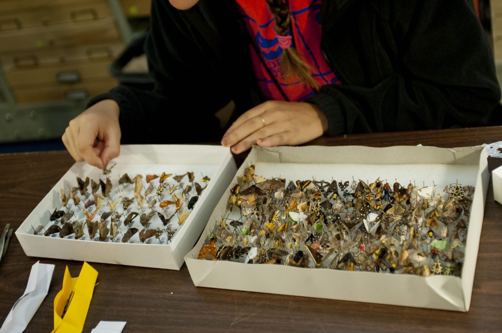 boxes of multicolored moths