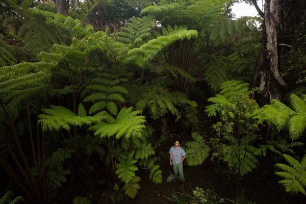 man standing below large plants