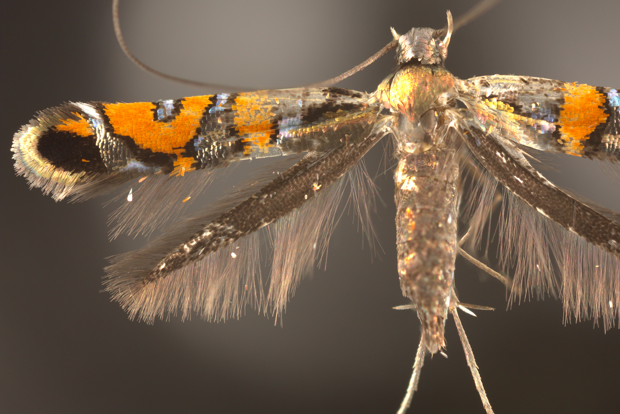 close up of moth wings and body
