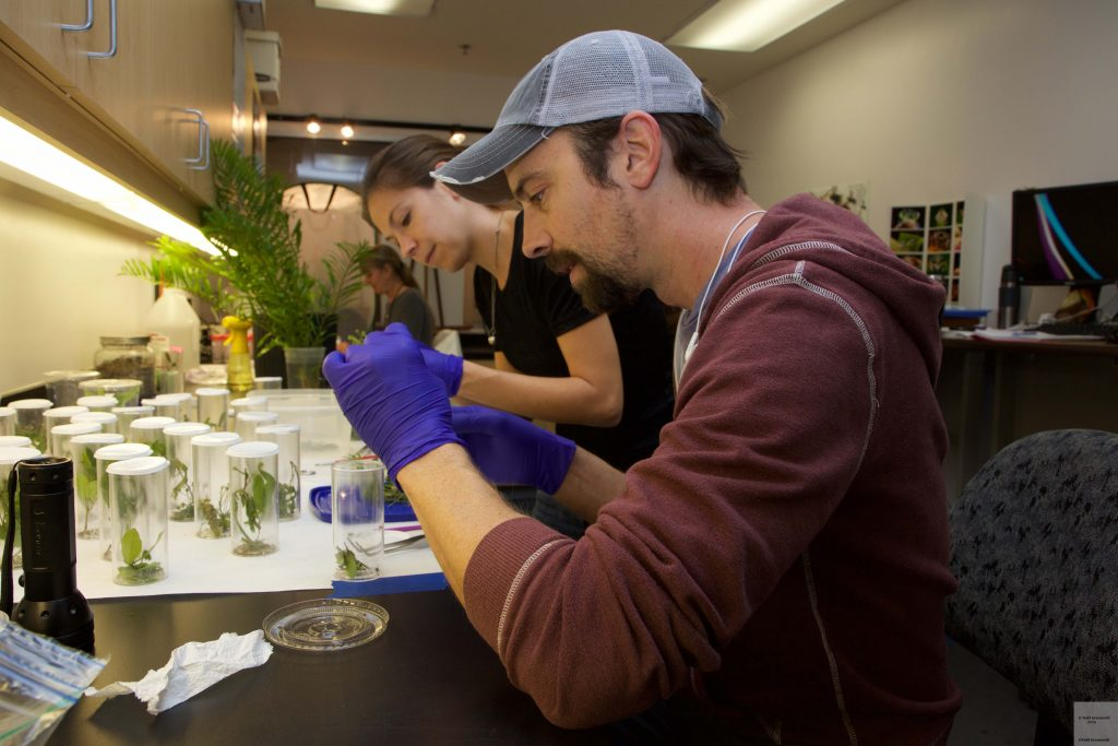 Researchers in a lab placing larvae on host plants