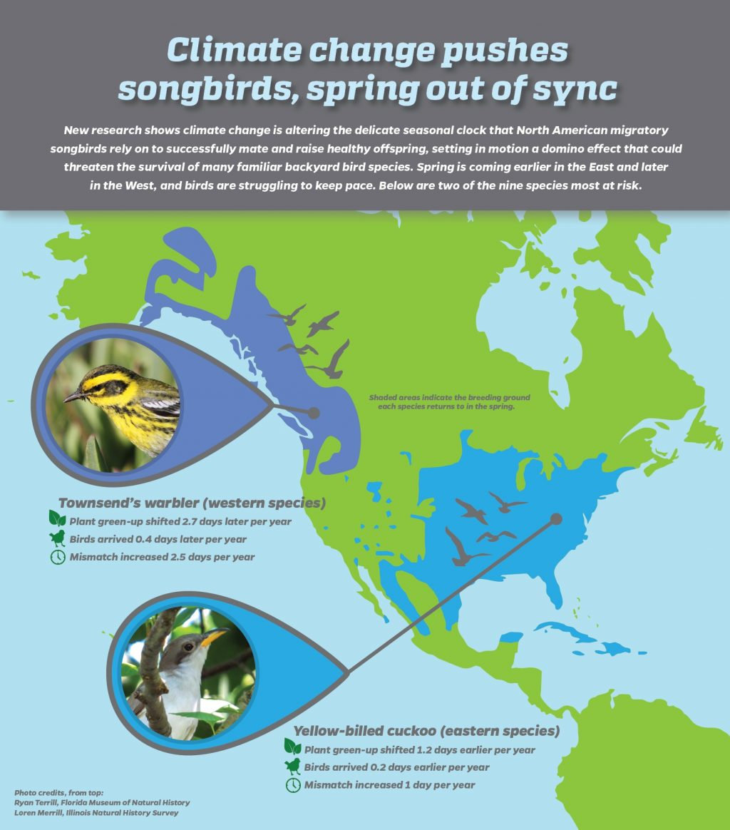 Climate change pushes songbirds, spring out of sync. Graphic courtesy of Elecia Crumpton, University of Florida Communications