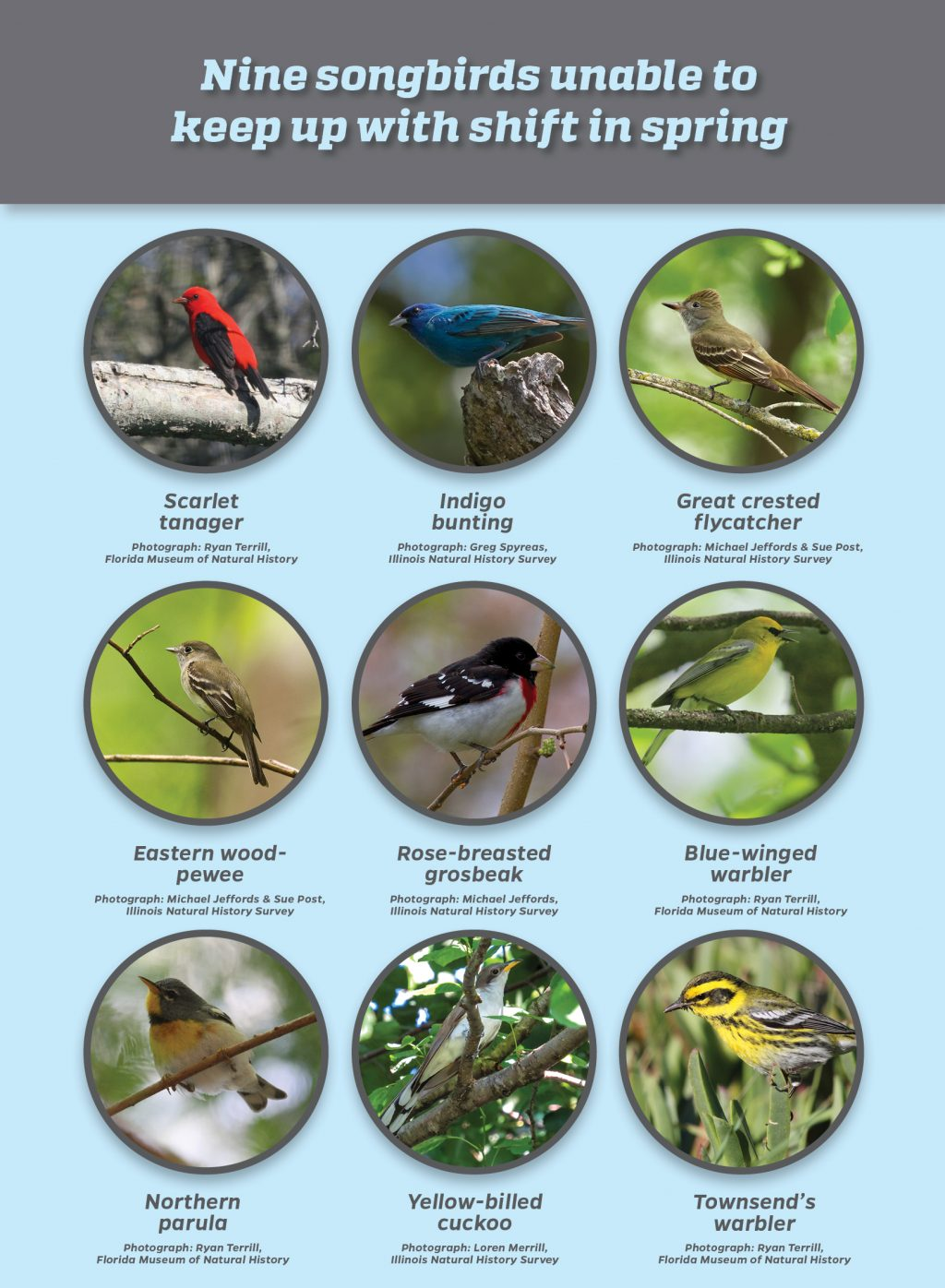 Nine songbird species