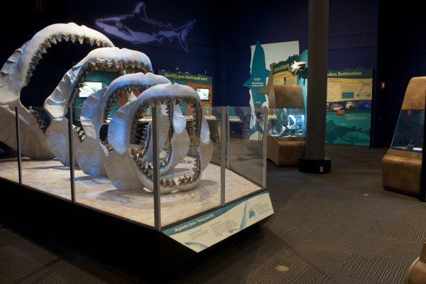 jaws in exhibit