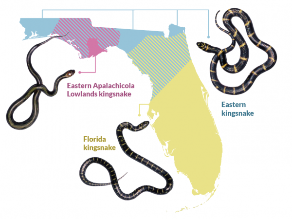 map shows snake locations in Florida