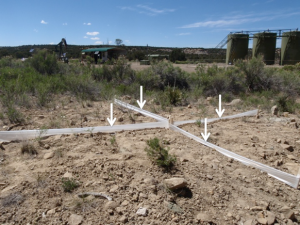 The researchers used traps to sample insect and spider communities. This set-up at a site with a compressor station shows four pitfall traps identified with white arrows. Photo courtesy of Jessie Bunkley