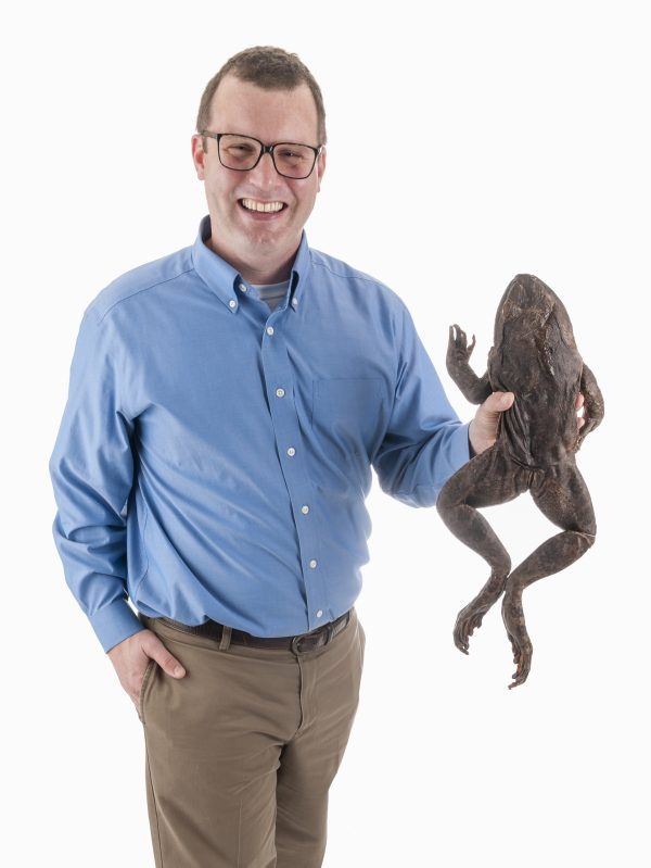 Herpetologist David Blackburn, shown with a Goliath frog from the museum's collection, co-authored a study that presents a new frog tree of life. Florida Museum of Natural History photo by Kristen Grace