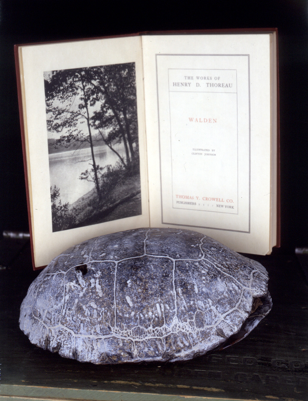 shell of turtle with copy of Walden