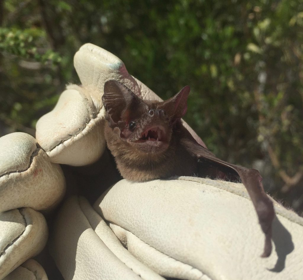 bat held in gloves