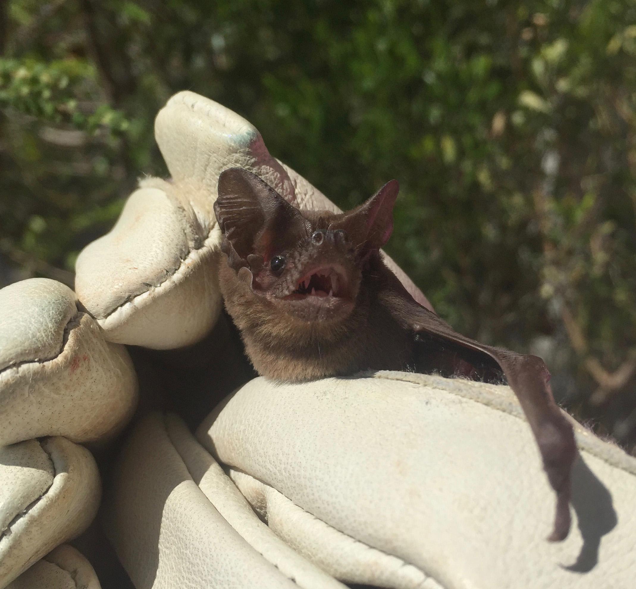 Bat Held In Gloves
