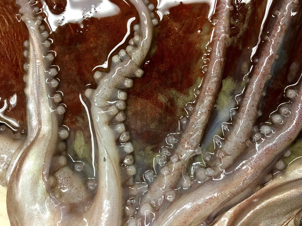 closeup of octopus web and tentacles