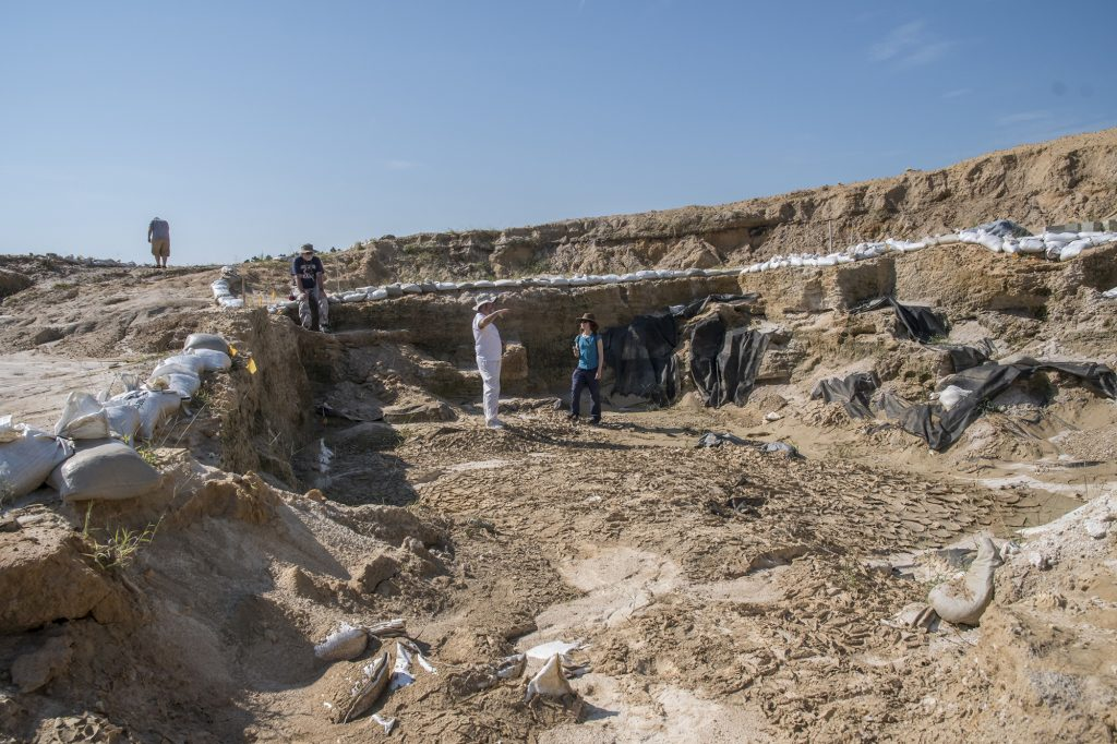 people in fossil dig site