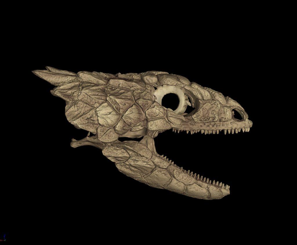CT scanned lizard skull