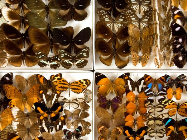 assorted preserved butterflies