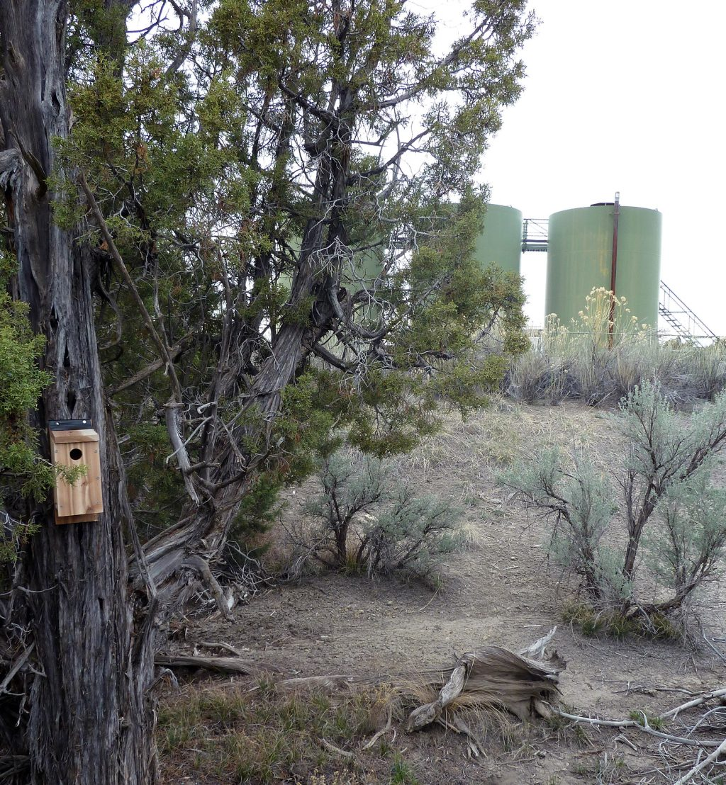 nesting box near industrial plant