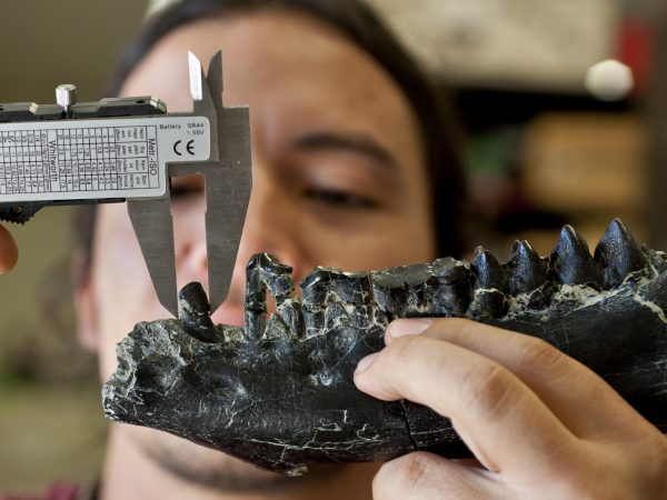 A researcher measures a jaw using lab equipment