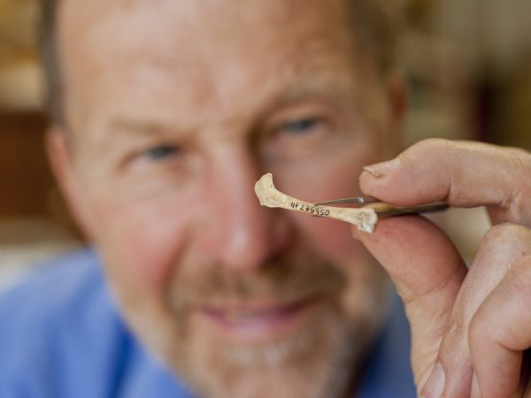 A researcher holds a tiny bird fossil with forceps