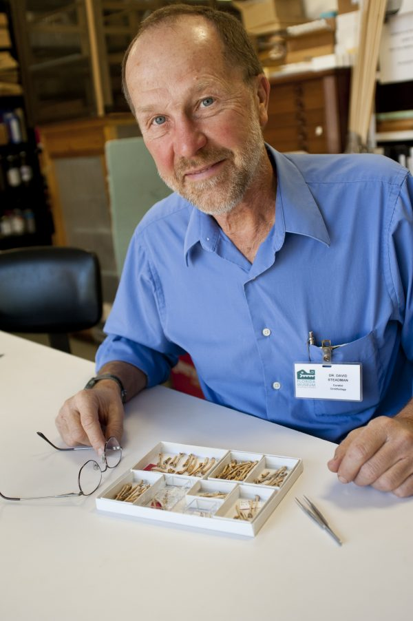 David Steadman with bird bones
