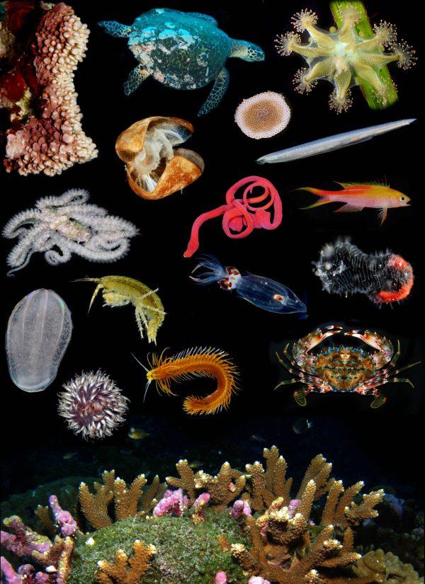 invertebrates collage