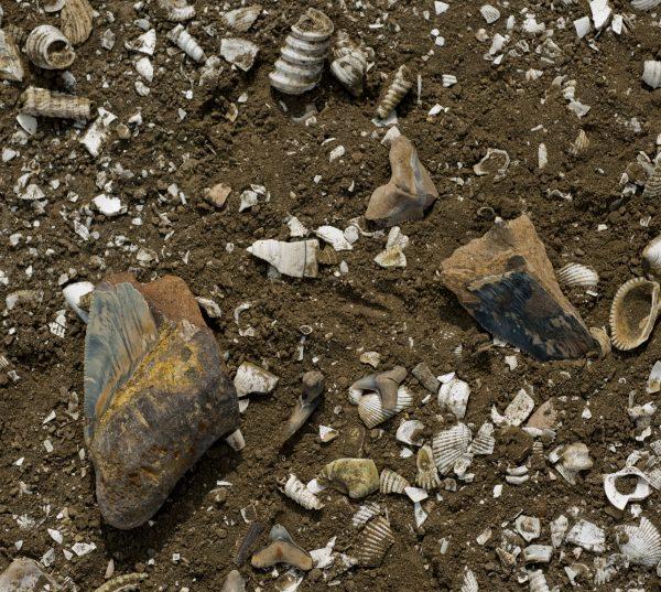 marine fossils on ground