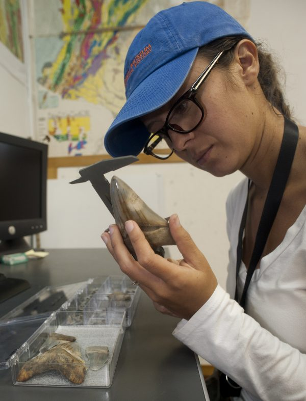 Catalina Pimiento measures a shark tooth