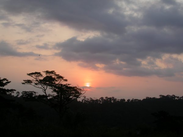 The sun sets over the trees in Africa