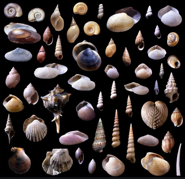 shellfish species collection