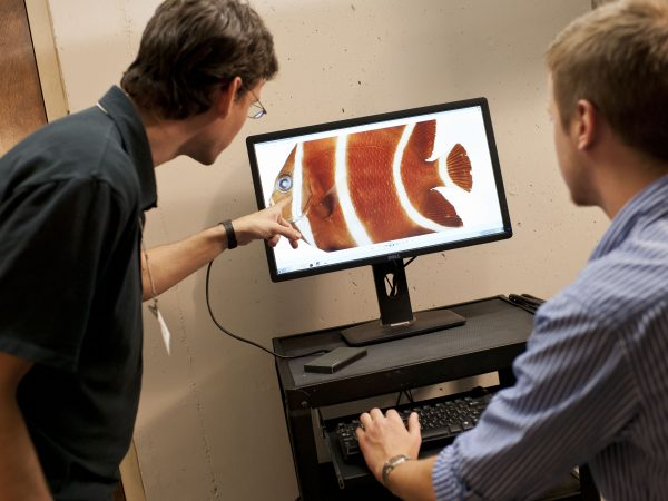 two men looking at fish image