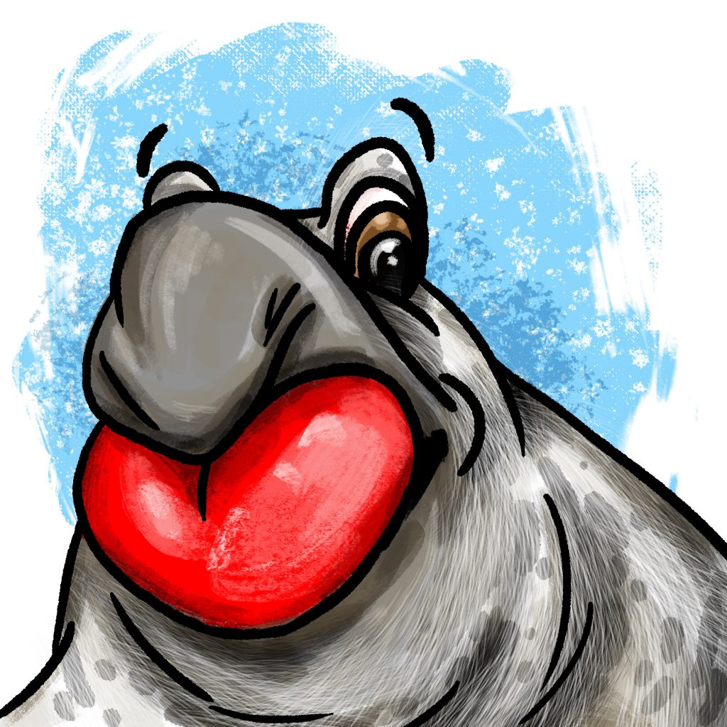 Cartoon of a male hooded seal with a red heart-shaped balloon coming out of his nose