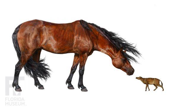 modern horse versus early horse