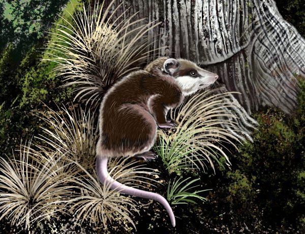 Illustration of herpetotheriid