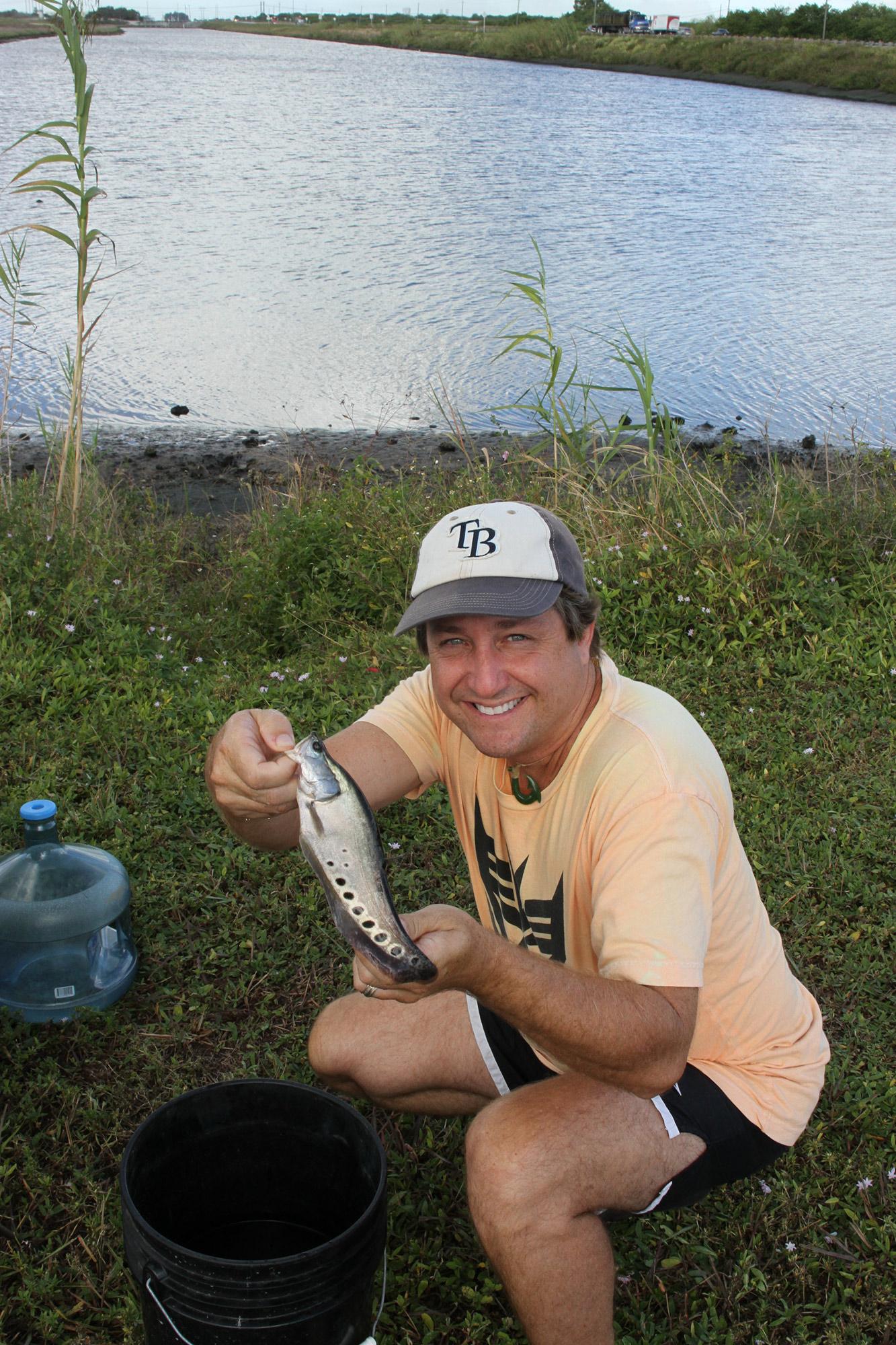 Florida Invasive Species Clown Knifefish Florida Museum Science